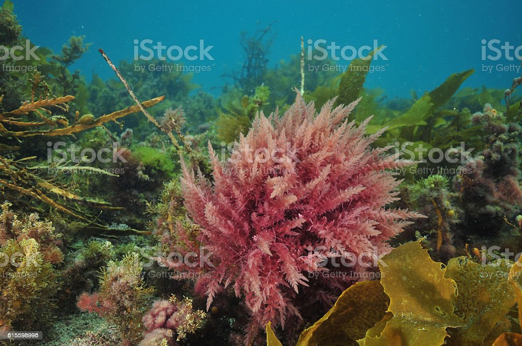 Colourful algae garden stock photo