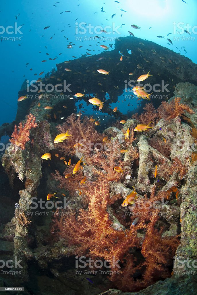 Colourful and vibrant soft coral growth on a shipwreck stock photo