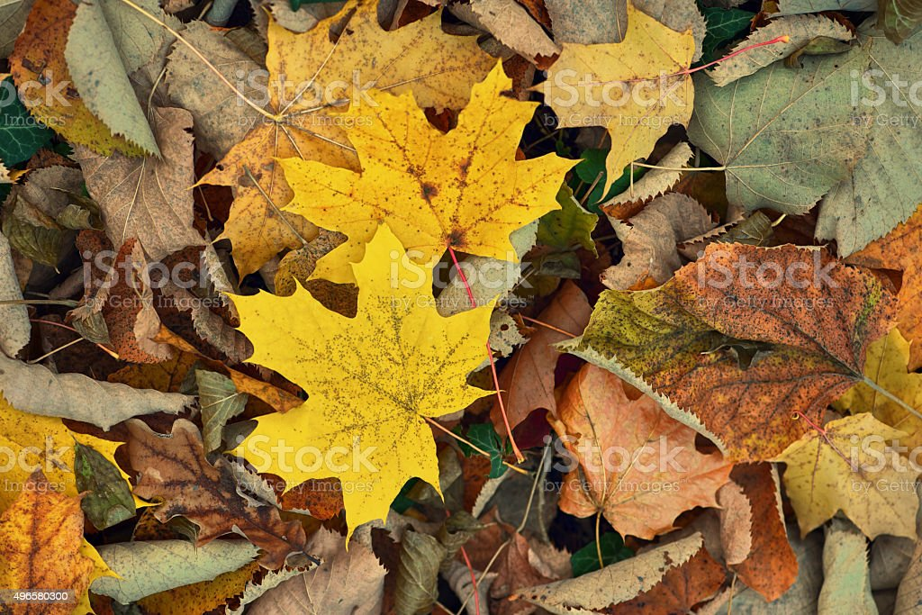 Colourful autmn leaves on the ground stock photo