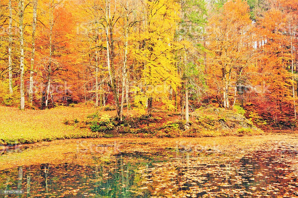 Colourful Autumn Forest and the Pond, Sneznik, Slovenia stock photo