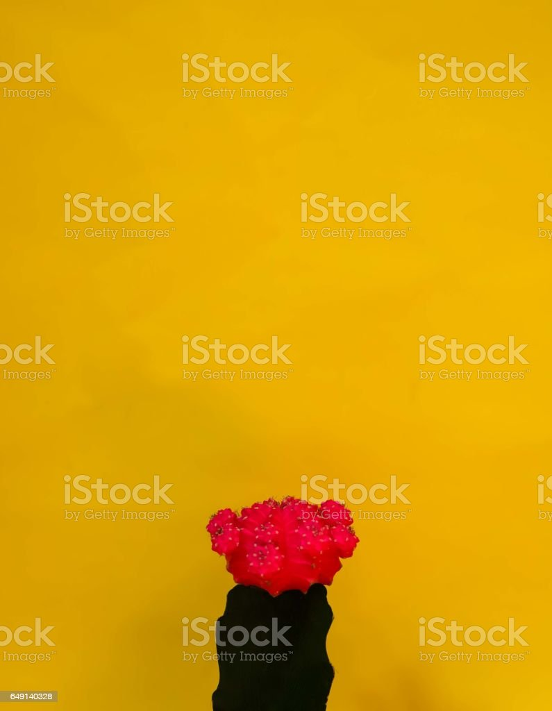 colourful background with cactus flower stock photo