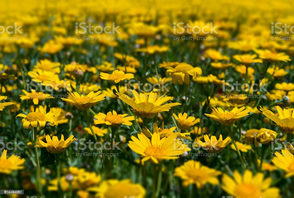 Colourful blooming wild flowers in an idyllic spring time meadow stock photo