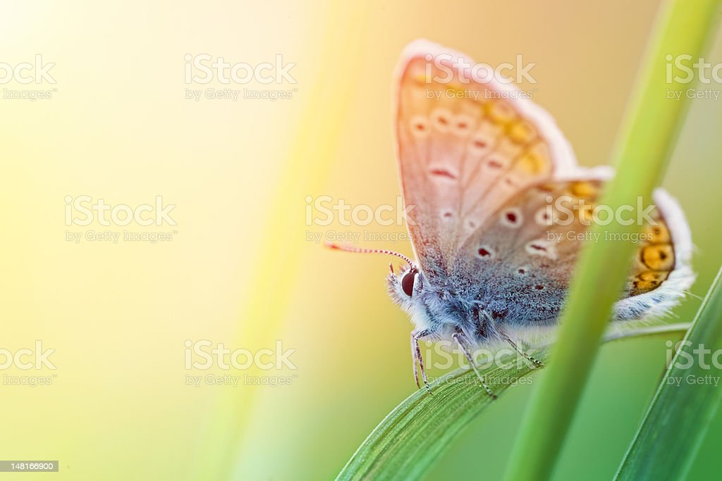 Colourful butterfly stock photo