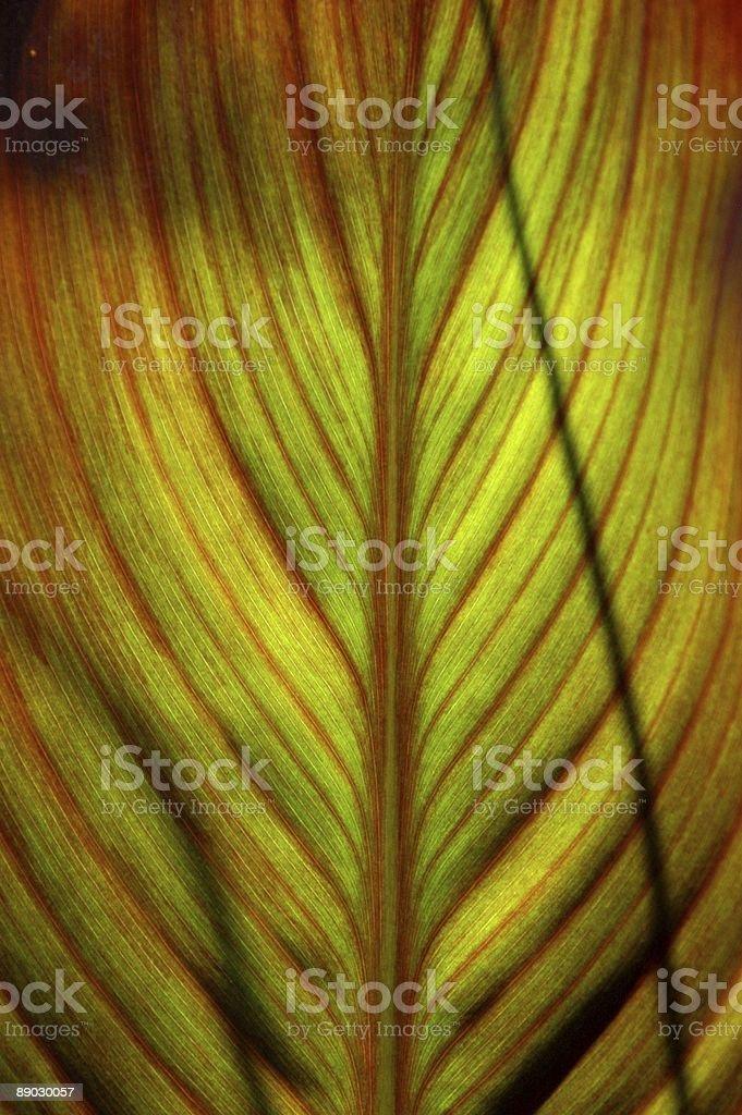 Colourful Cannas stock photo