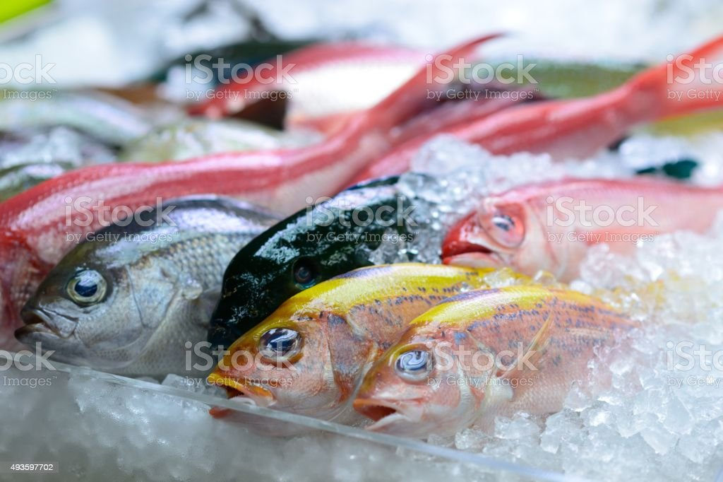 Colourful catch stock photo