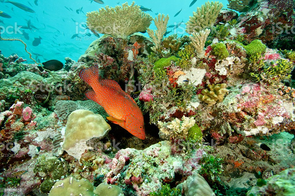 colourful coral reef stock photo