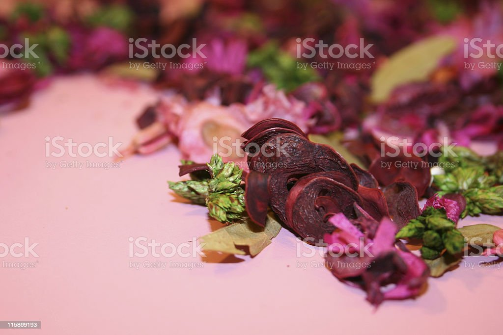 colourful dried flower royalty-free stock photo