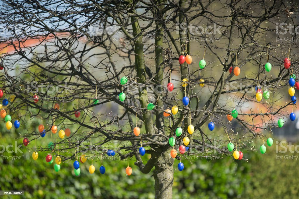 Colourful Easter eggs at the tree stock photo