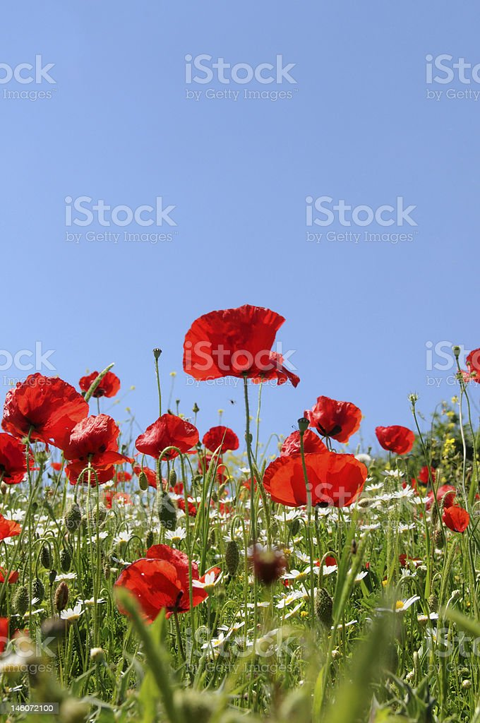 Colourful fields royalty-free stock photo