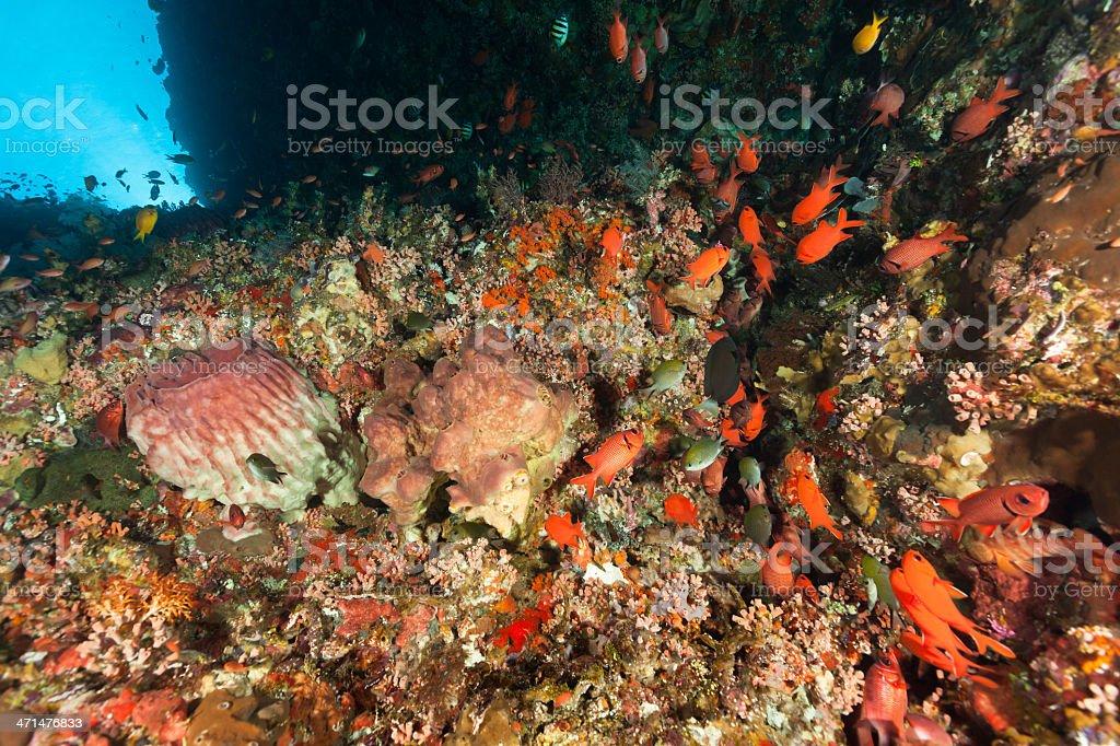 Colourful Fish Meeting Deep Down, Pantar Strait, Alor, Indonesia royalty-free stock photo
