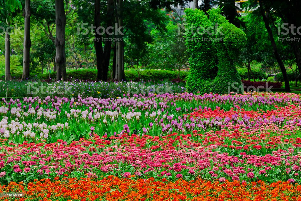 Colourful Flowerbeds royalty-free stock photo