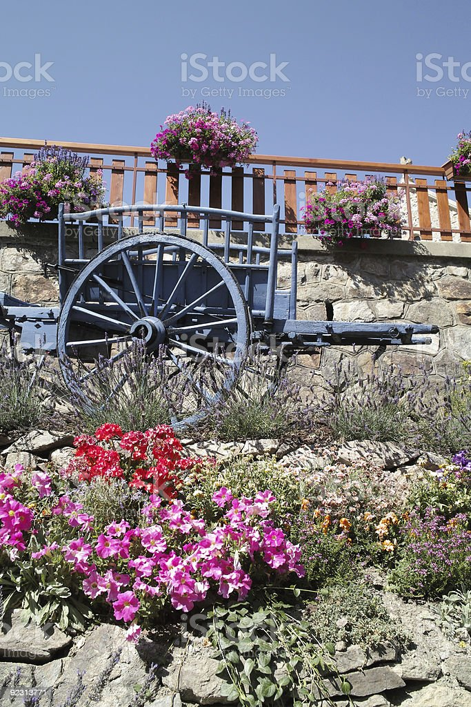 colourful garden with flowers old horse carriage stock photo