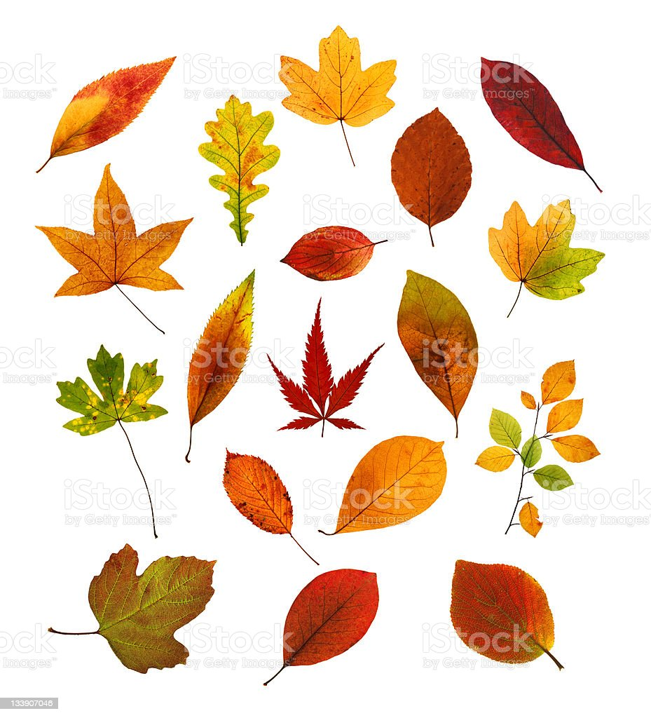 Colourful Leaf Collection royalty-free stock photo