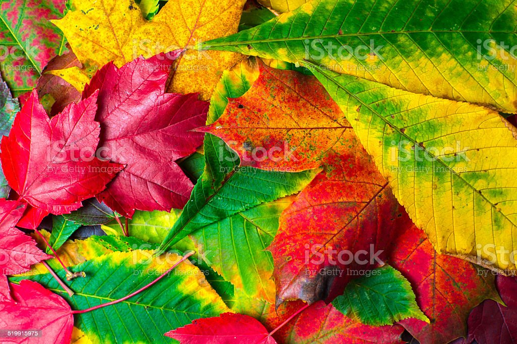 Colourful Leaves nicely arranged - Autumn stock photo