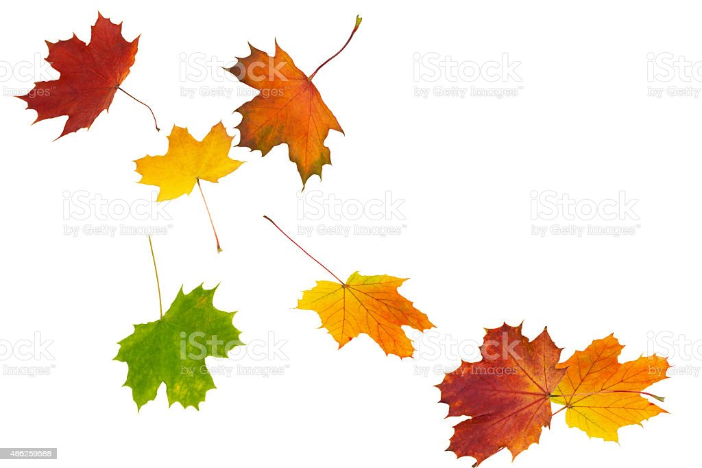 colourful leaves stock photo