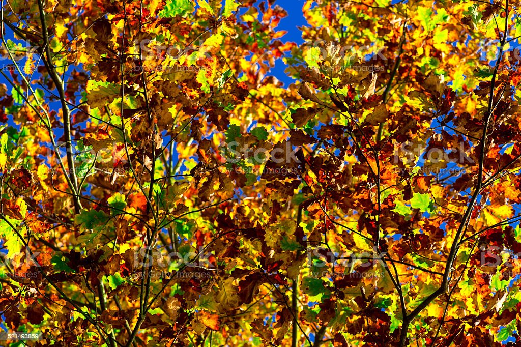 Colourful Leaves with blue sky - Autumn stock photo