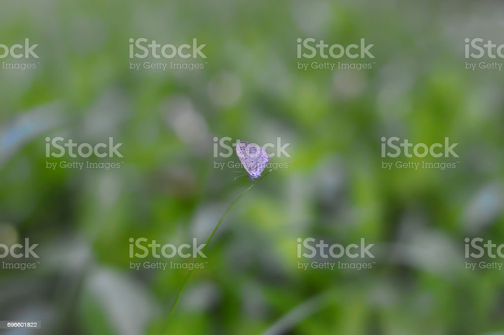 Colourful little butterfly stock photo