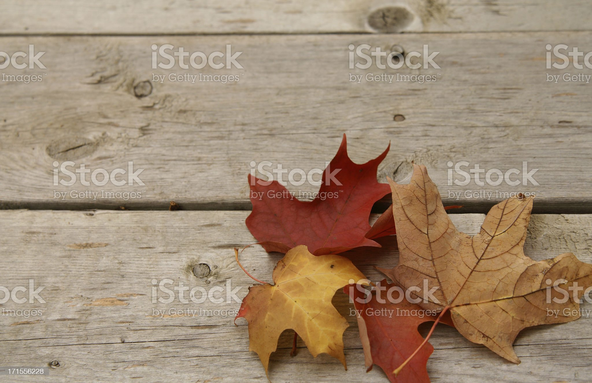 colourful maple leaves on a wooden floor royalty-free stock photo