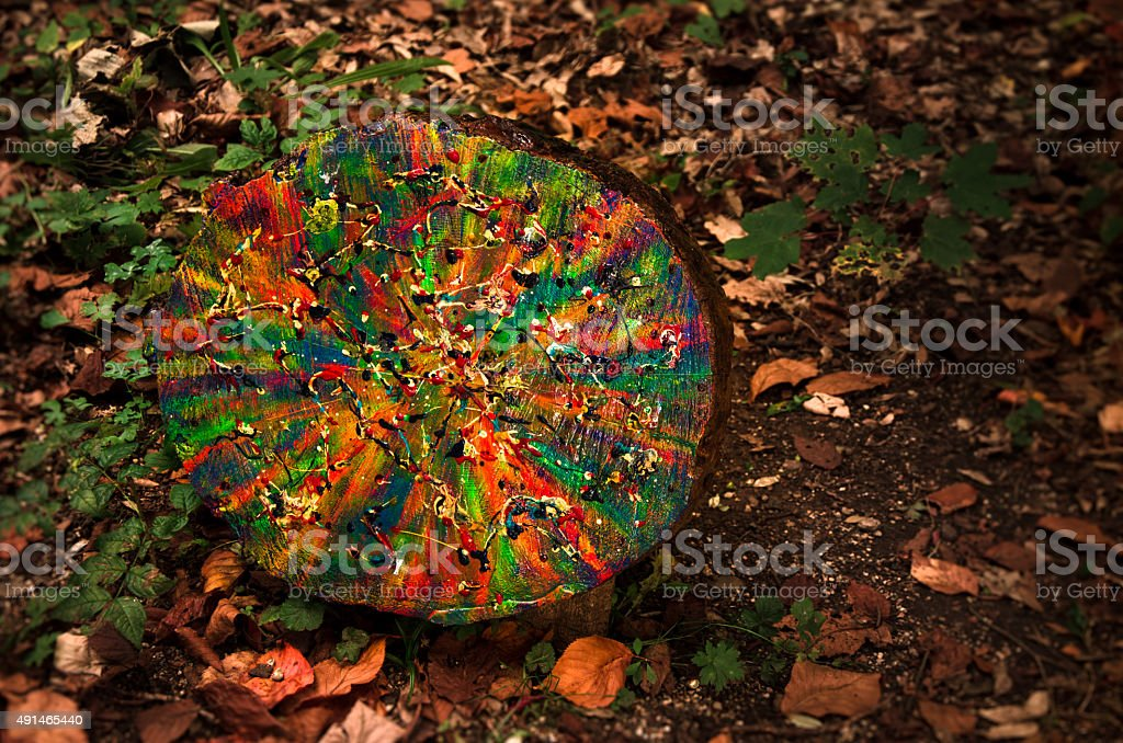 Colourful natural gift - free art stock photo