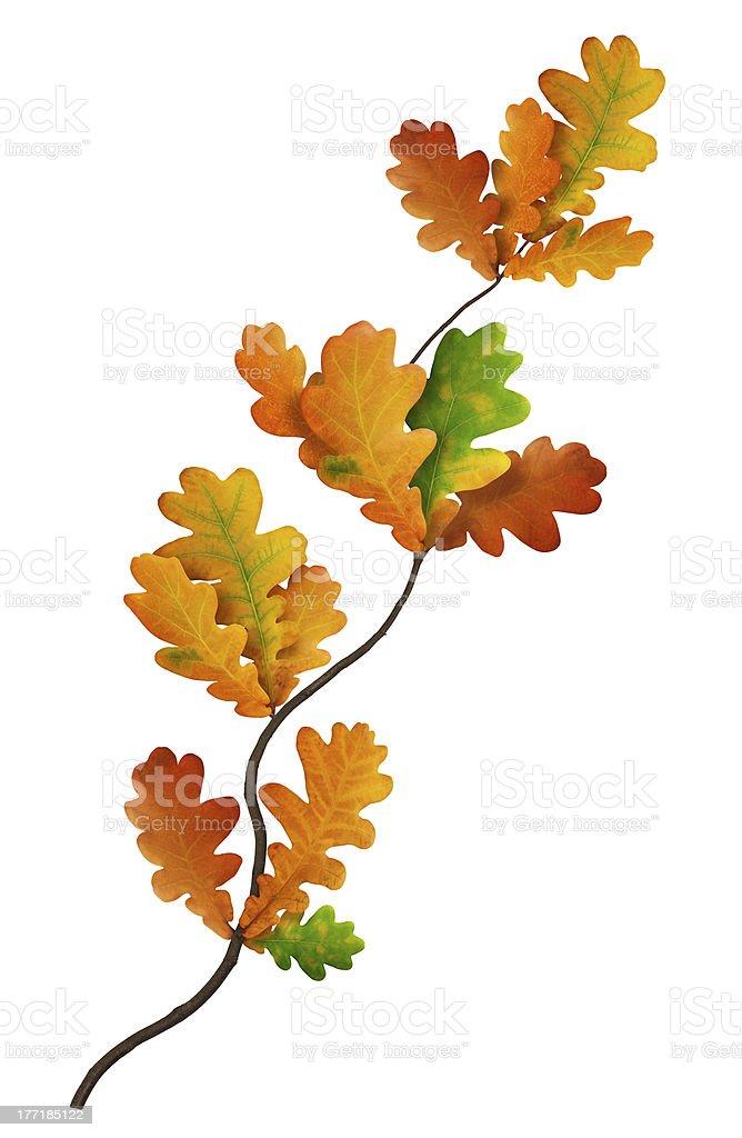 Colourful Oak Branch royalty-free stock photo
