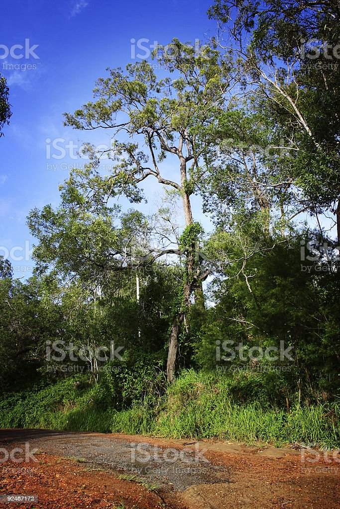 Colourful Outback - Bush Road royalty-free stock photo
