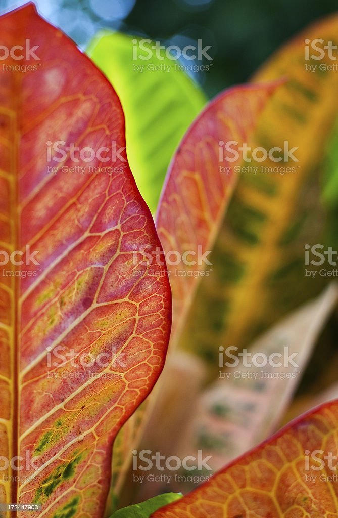 Colourful Plant Leaves royalty-free stock photo