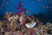 Colourful reef scene, Red Sea, Egypt