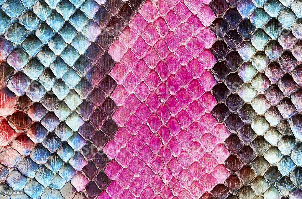 Colourful snake skin royalty-free stock photo