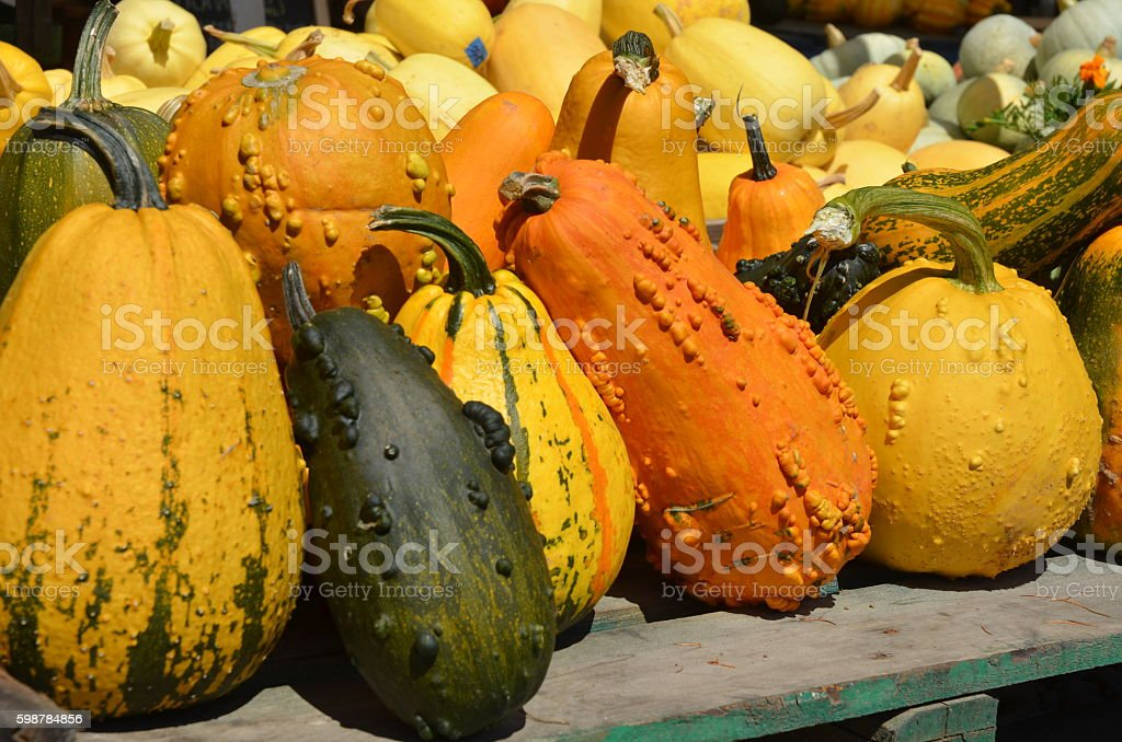 Colourful Squash royalty-free stock photo