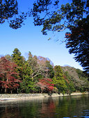 Colourful Trees in Japan