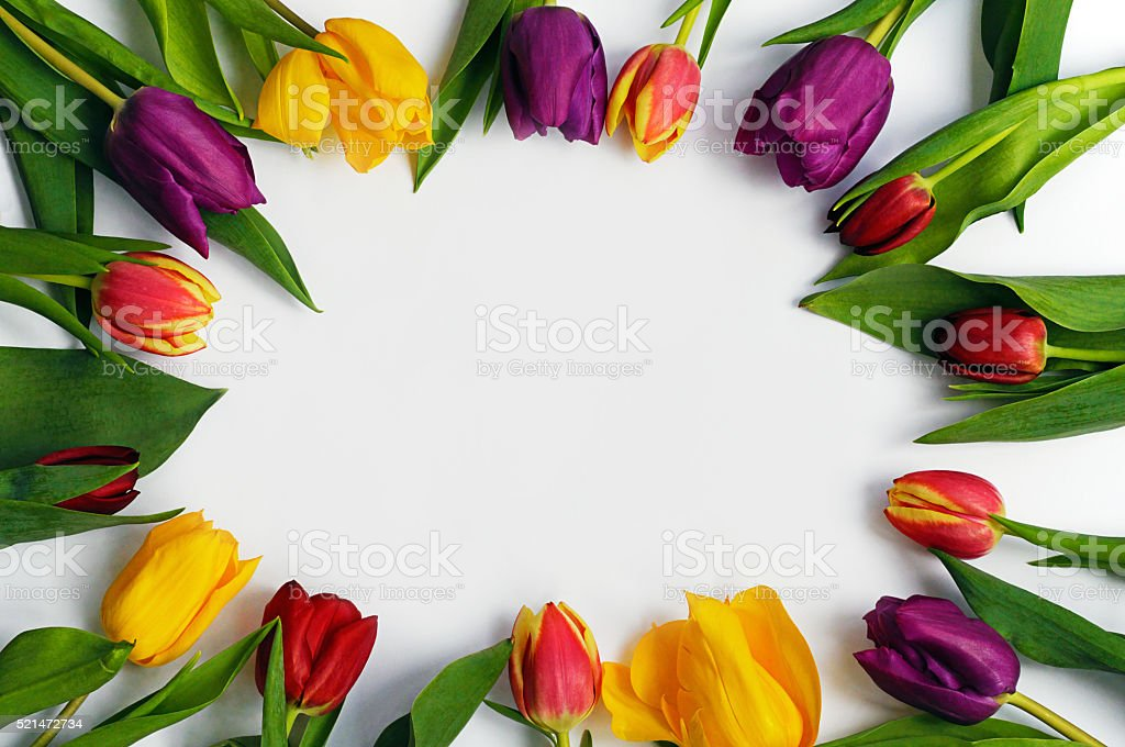 Colourful tulips in a circle on white background. stock photo