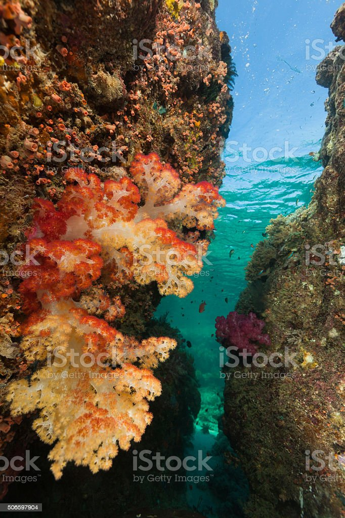 Colourful Underwater Canyon, Beautyful Softcoral, Komodo National Park, Indonesia stock photo