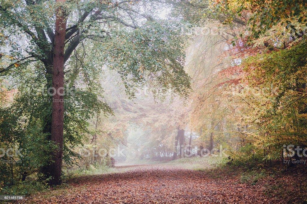 Colourful woodland scene in autumn / fall. stock photo