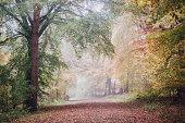 Colourful woodland scene in autumn / fall.