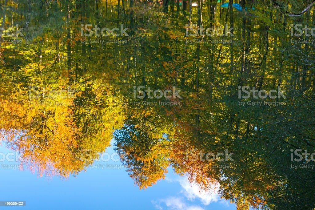 Colours of Autumn stock photo