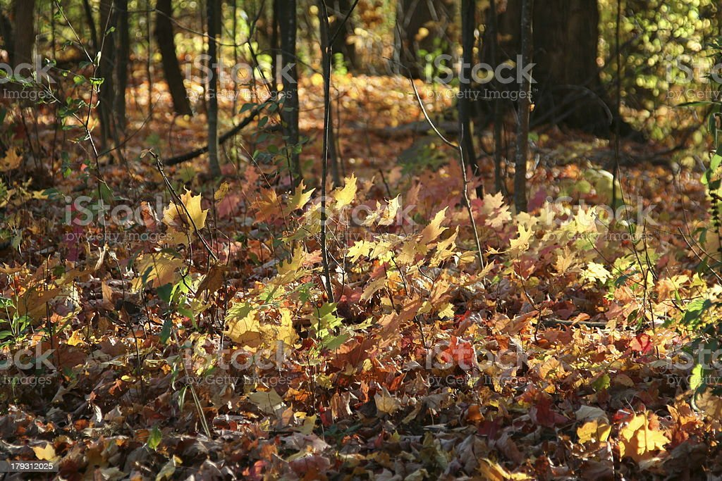 Colours of fall stock photo