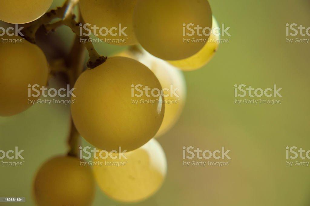 Colseup grapes stock photo