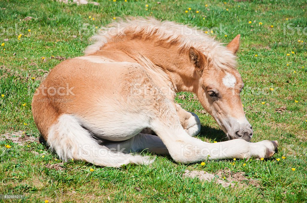 Colt on a green grass stock photo