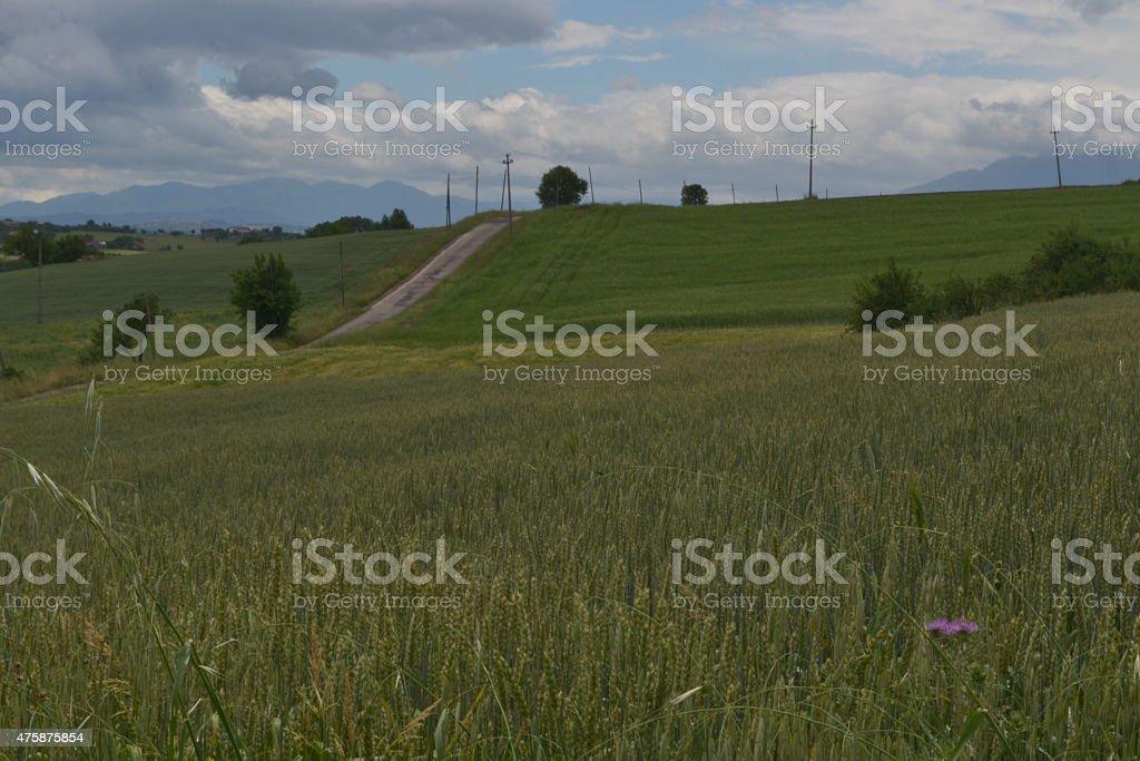 Coltivazione intensiva di grano e Cereali stock photo