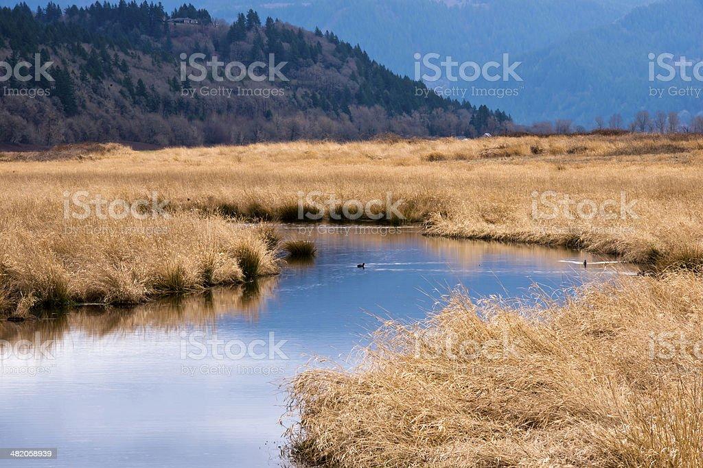 Columbia Gorge vista acqua, erba alberi di anatre foto stock royalty-free