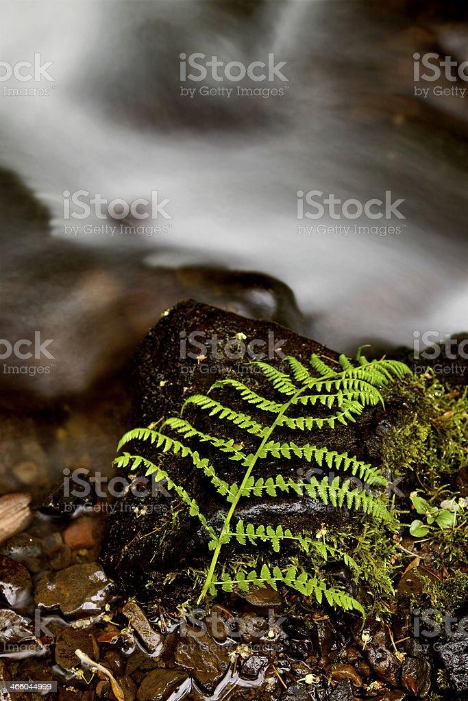 columbia river gorge Oregon stock photo