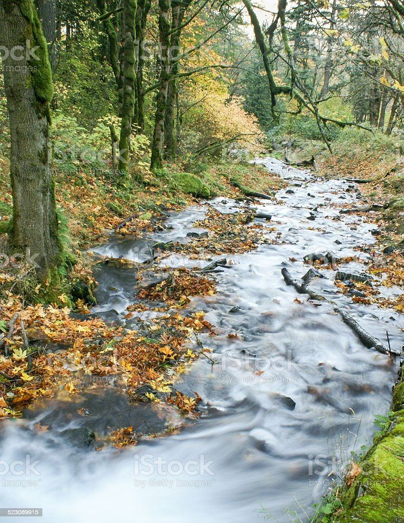 Columbia River Gorge stream in fall color stock photo