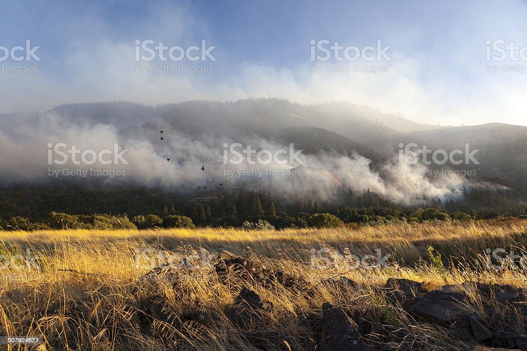 Columbia River Gorge Wildfire. stock photo