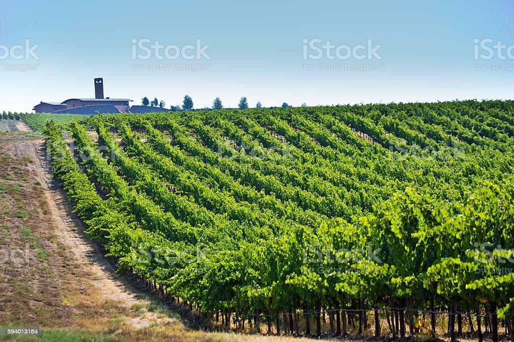 Columbia Valley Vineyard Winery Landscape of Washington State USA stock photo