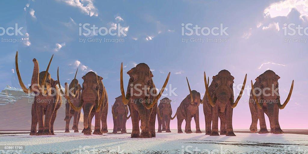 Columbian Mammoth Herd stock photo