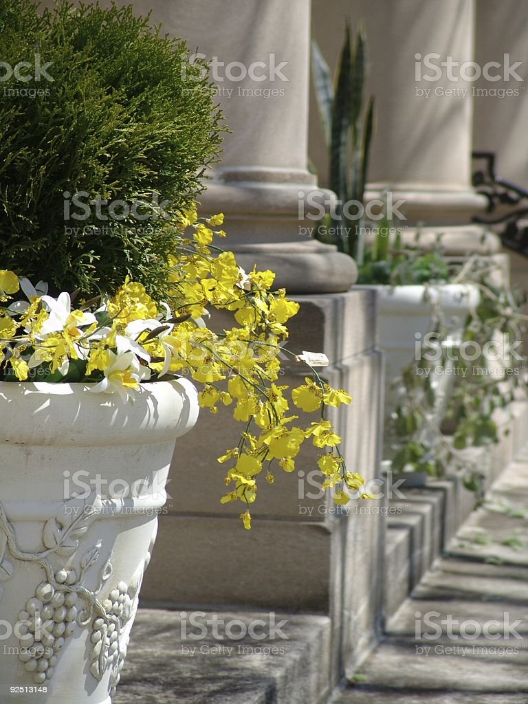 Columns in the Spring royalty-free stock photo