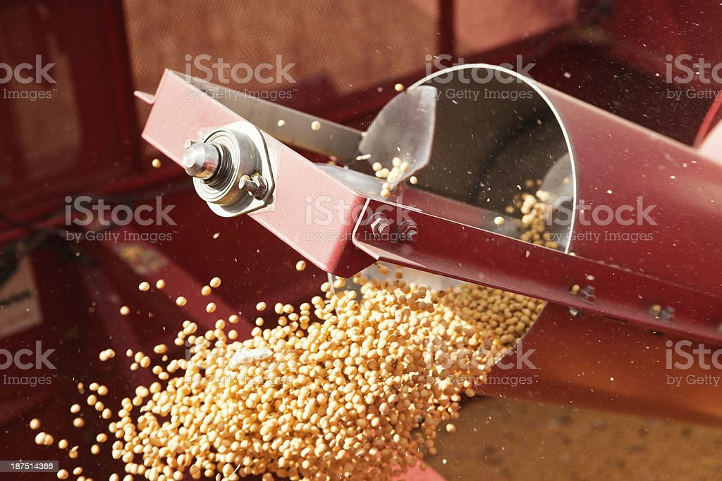 Combine Grain Tank Auger with Falling Soybeans stock photo