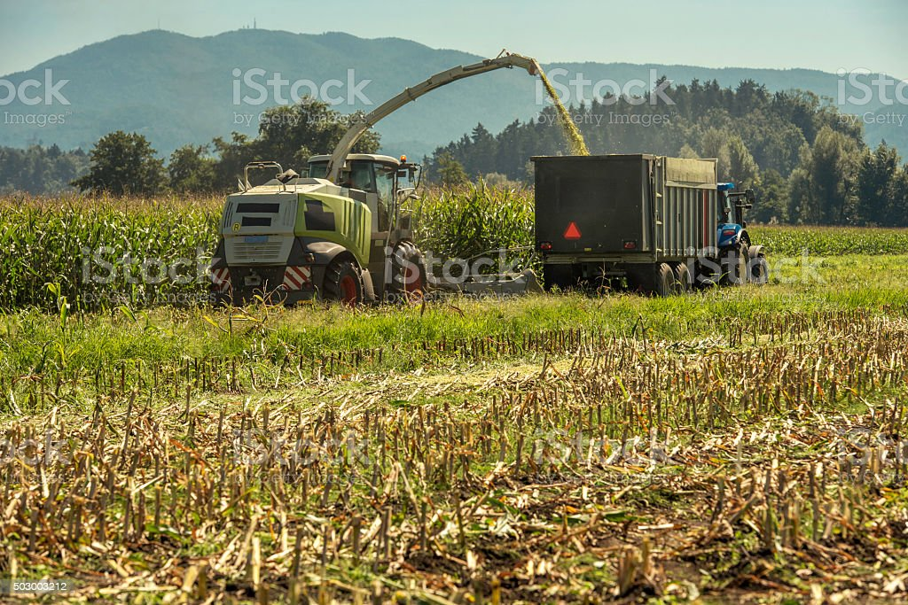 Combine harvester and tractor with trailer harvesting corn stock photo