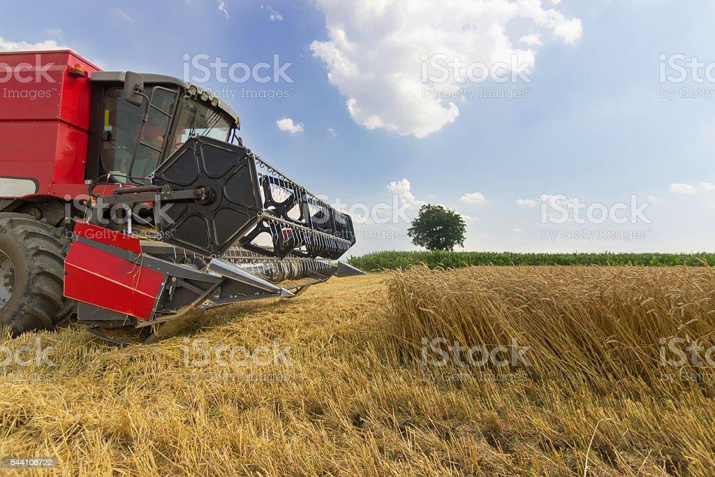 Combine harvester harvesting wheat. Grain harvesting combine. stock photo