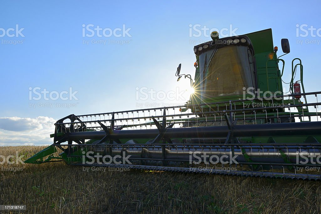 Combine Harvester in Barley Field during Harvest backlit by sun stock photo